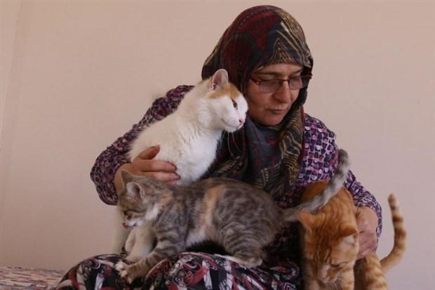 Sokaktaki Kediler İçin Yeni Ev Aldı
